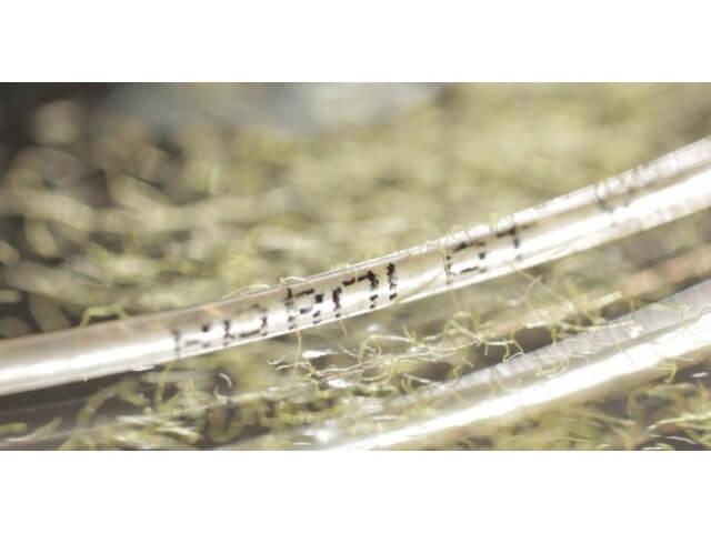 Натуральные струны для тенниса Babolat VS